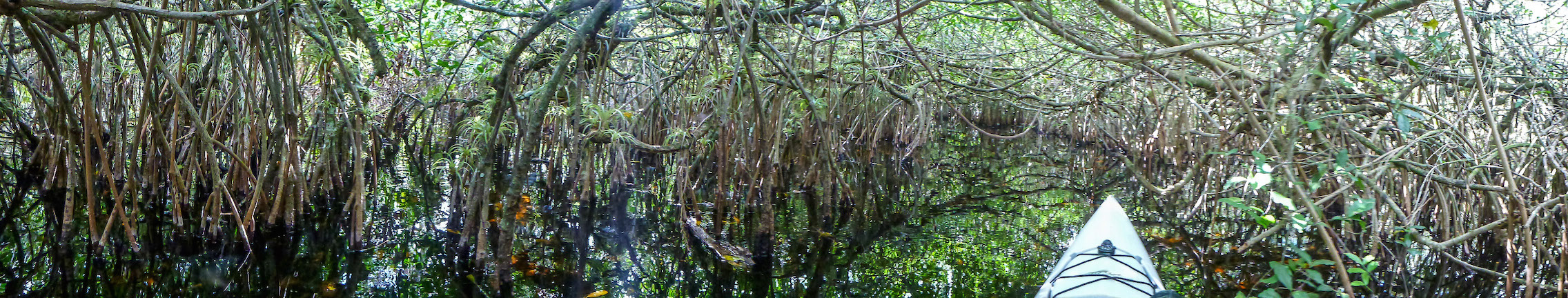 everglades-mangrove-tunnel-2015